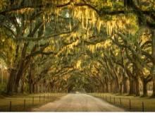 Savannah Fall Guide